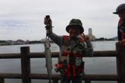 サゴシを釣ったヨ